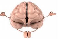 Important de garder sa masse cérébrale