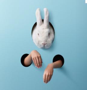 Un lapin stressé