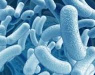 Ils sont des micro-organismes vivants