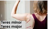 Les petits muscles du dos
