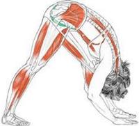 Allonger les muscles de la hanche