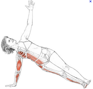 Sollicite la force musculaire