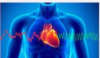 Diminue la fréquence cardiaque