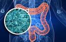 Un individu en bonne santé abrite en moyenne cent mille milliards de bactéries intestinales qui peuvent peser jusqu'à 3 kilos