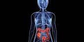 Notre système immunitaire se trouve autour du tube digestif.