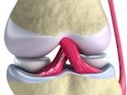 Les ligaments du genou sont en rose