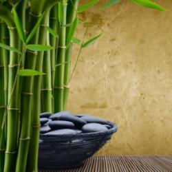 bamboo_image