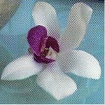 fleur_belle